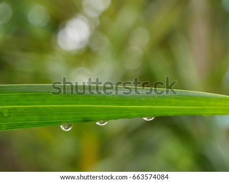 raindrops under leaf and reflection in raindrops with bokeh background