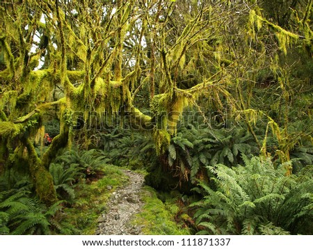 Rainforest along Milford track, New Zealand