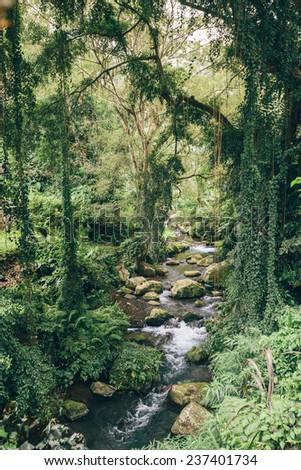 Rainforest at Kawi, Ubud, Bali, Indonesia - stock photo