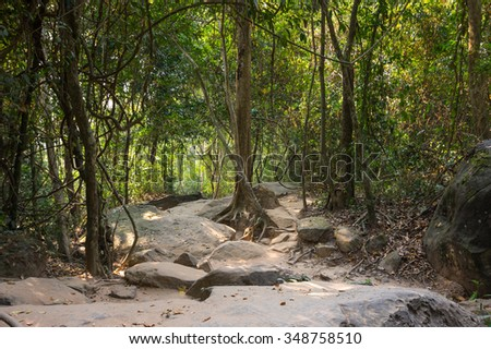 Rainforest at sunny day in Cambodia, south-eastern Asia