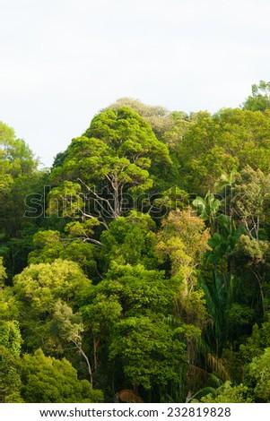 Rainforest canopy - stock photo