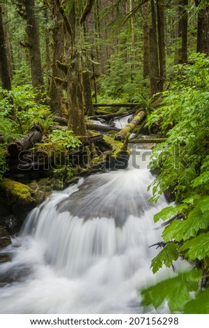 Rainforest Creek. This idyllic small stream meanders through a rainforest environment in the Mt. Baker National Forest near the scenic Nooksack Falls in western Washington state.