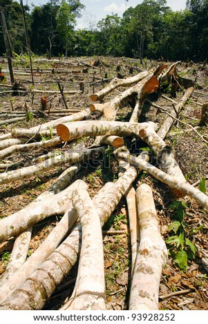 Rainforest deforestation in Peru. Trees cut for slash and burn cultivation - stock photo