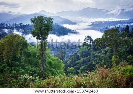Rainforest, Ecuador, Latin America - stock photo