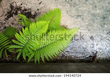 Rainforest fern, Fern leaf in the forest. - stock photo