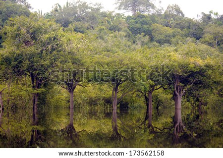 Rainforest in Amazon, Manaus, Brazil - stock photo