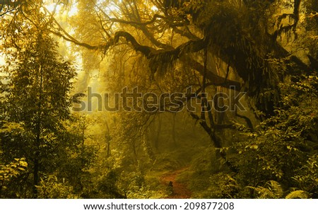 Rainforest in autum - stock photo