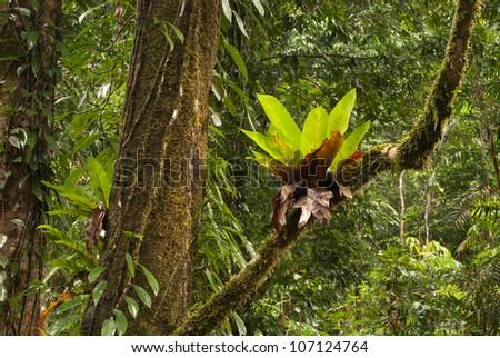 rainforest in North Queensland, Australia - stock photo