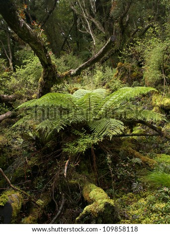Rainforest in Stewart island, New Zealand - stock photo