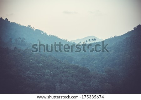 Rainforest in the mountains - stock photo