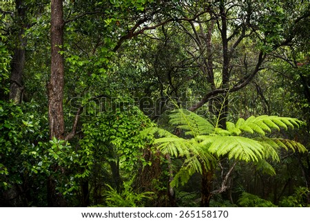 Rainforest landscape of ferns and trees wet with rain in the rainforest - stock photo