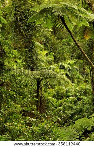 rainforest near Cairns, Queensland, Australia - stock photo