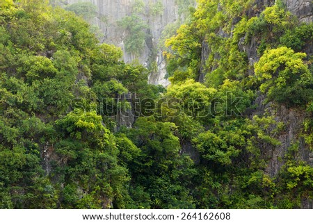 Rainforest on rocky cliff in the Halong bay, Vietnam - stock photo