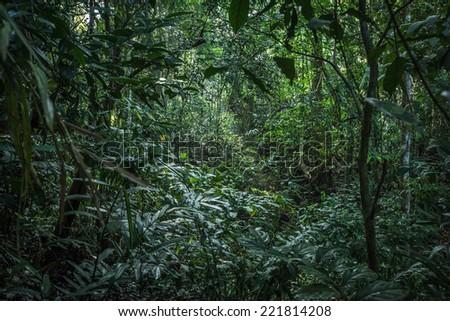 Rainforests of Khao Yai National Park, Thailand - stock photo