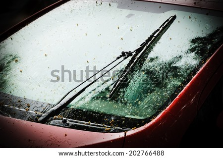 Raining. Wet red car  with fallen tree seeds. Selective focus on the windscreen wiper. Dark toned image.  - stock photo