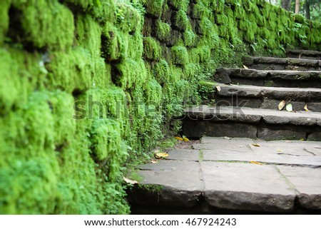 rainny season scenery with moss and a footpath leading into the scene