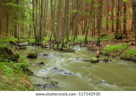 rainy day in a forest with small creek