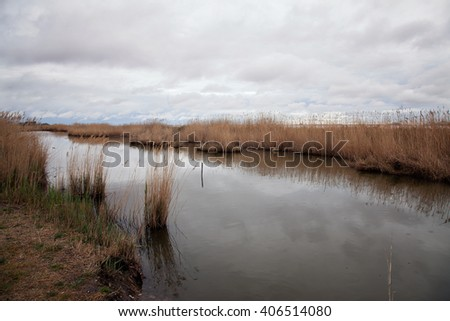 Rainy day swamps of Camargue - stock photo