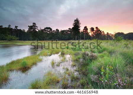 rainy sunrise over forest lake in summer