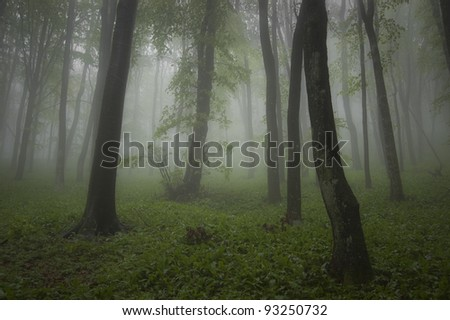 rainy weather in a green forest - stock photo