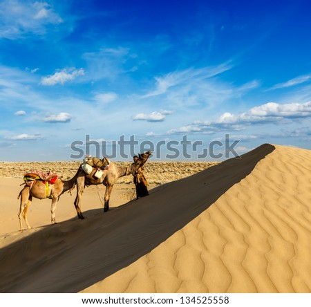 Rajasthan travel background - India cameleer (camel driver) with camels in dunes of Thar desert. Jaisalmer, Rajasthan, India - stock photo