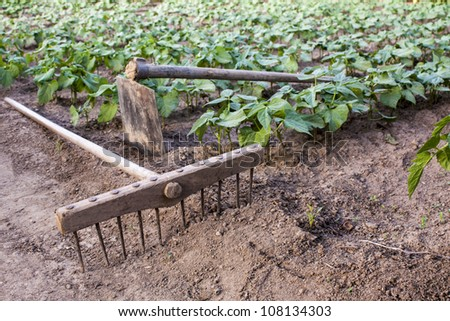 rake and hoe on farm,beans plantation background