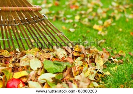 Raking Autumn Leaves - stock photo
