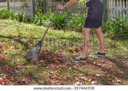 Raking Autumn leaves in the garden. Doing Garden maintenance. - stock photo
