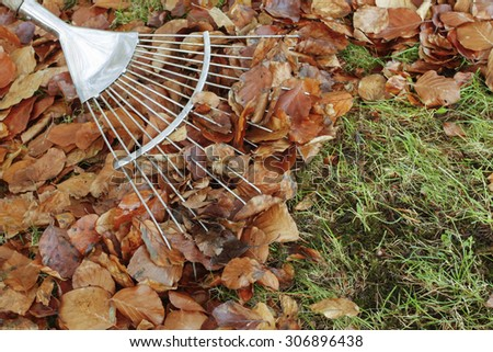 Raking autumn leaves on grass lawn