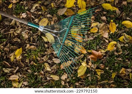 raking leaves in the Fall - stock photo