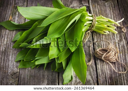 ramson (bear garlic) bunch tied with rope on old wooden background