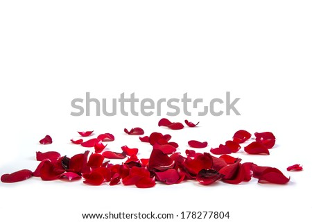 Random rose petals against white background. Great for presentations, forms and ad print. - stock photo