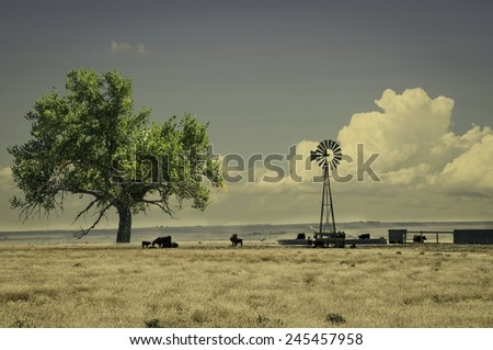 stock-photo-range-cattle-around-a-windmill-water-tank-in-northeastern-colorado-usa-retro-instagram-look-245457958.jpg