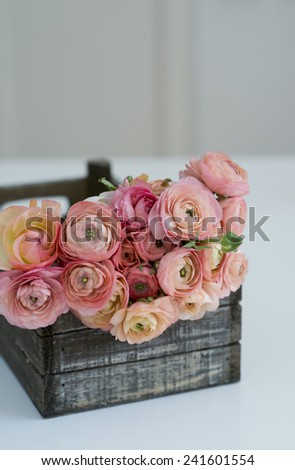 ranunculus in the vintage wood box - stock photo