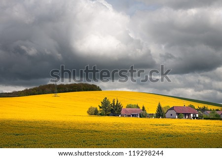 Rape field.Rape field at overcast day. France. - stock photo