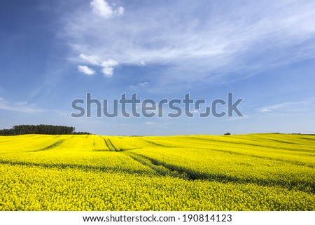 Rape fields in north Poland./ Rape fields.