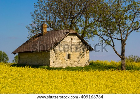 rape flower, with little old house