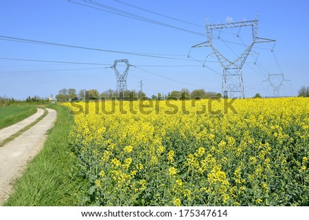 Rapeseed Brassica napus field with electric pylons in the centre region in France - stock photo