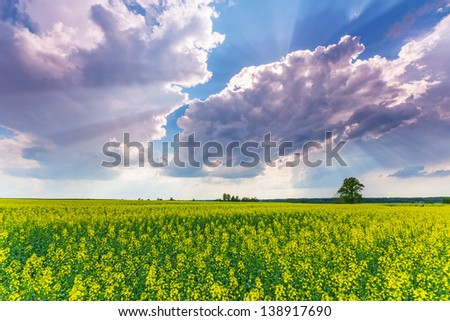 Rapeseed field and dramatic sky - stock photo