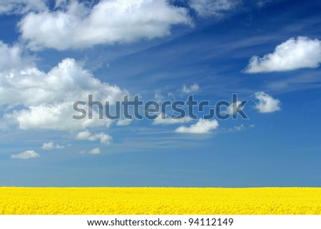 Rapeseed field and white cloud on the blue sky - stock photo