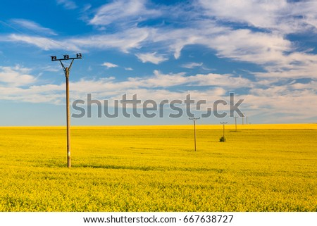 Rapeseed field in the Czech Republic countryside at sunset