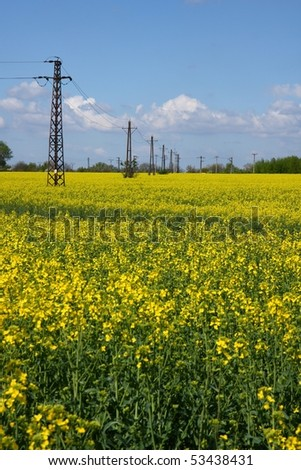 Rapeseed field with transmission towers in spring