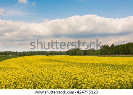 Rapeseed on the background of the blue sky