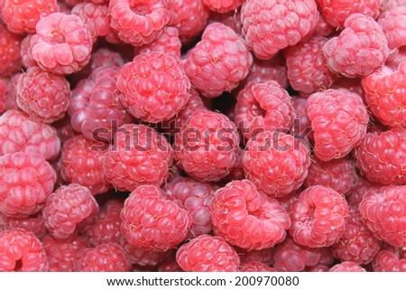 Raspberries. Background of ripe red raspberries. - stock photo