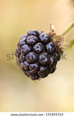 Raspberry  macro in the garden - stock photo