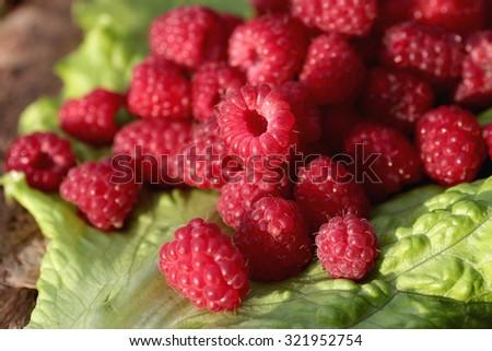 raspberry on a green leaf - stock photo