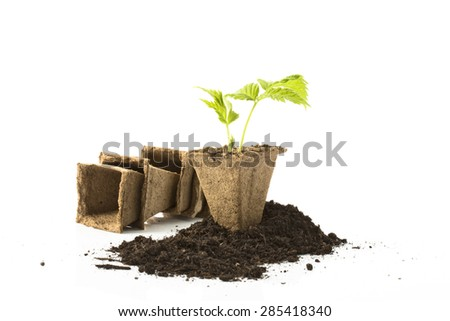 Raspberry plant, soil, peat pots on white background - stock photo