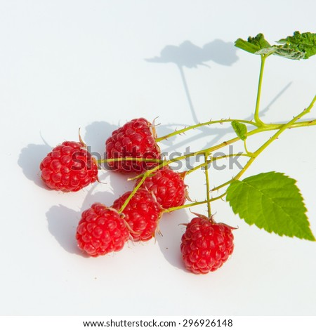raspberry, razz, fence, stash. an edible soft fruit related to the blackberry, consisting of a cluster of reddish-pink drupelets. - stock photo