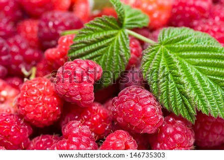 Raspberry with leaves closeup shot