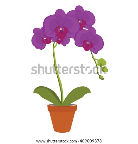 Raster illustration exotic purple orchid flower in a pot. Phalaenopsis orchid blooming in a pot